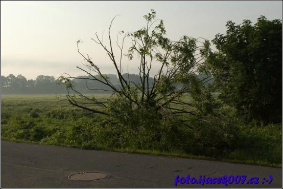 obrázek vyvrácený strom