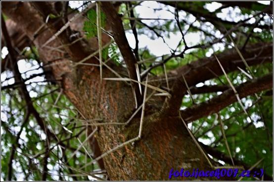 obrázek strom s trny