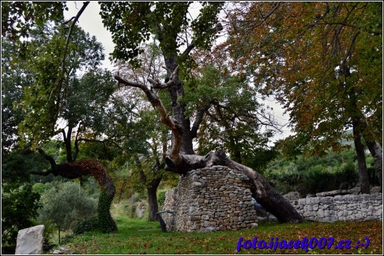 obrázek strom