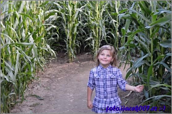 obrázek V kukuřičném bludišti