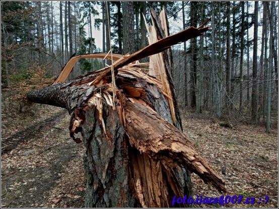 obrázek stromy